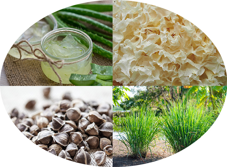 水を使わず、植物エキスを贅沢に使用