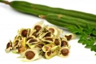 モリンガオイルのもと、モリンガ種子の効能は?